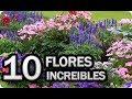 10 Flores Imprescindibles Para Poner En El Huerto