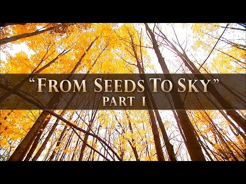 "Wisconsin Young Forest Partnership ""From Seeds to Sky"" (Part 1)"