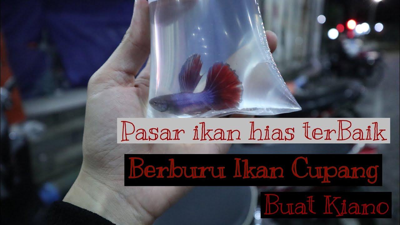 Pasar Ikan Hias Terbaik Berburu Ikan Cupang Pasar Gunungsari Surabaya Murah Sampe Yg Mahal Youtube