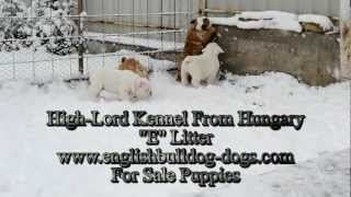 """E"" Litter High-Lord kennel puppies"