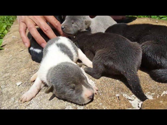 Rescuing Puppy Litter From Drain || ViralHog