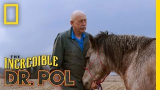 The Incredible Dr. Pol - Horse Castration