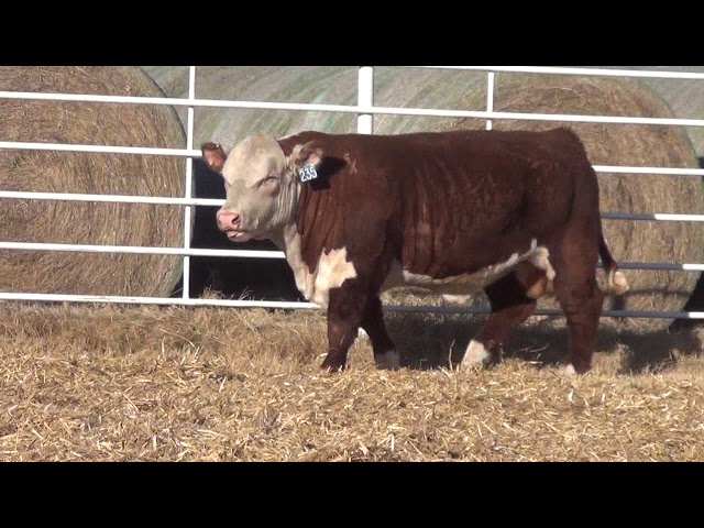 Express Ranches Lot 235
