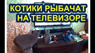 Смешные котики ловят искусственных мальков на телевизоре.