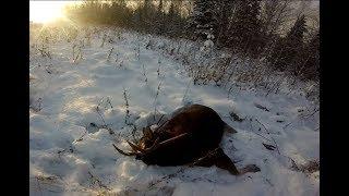 Охота на лося подборка моментов.Moose hunting best moments.
