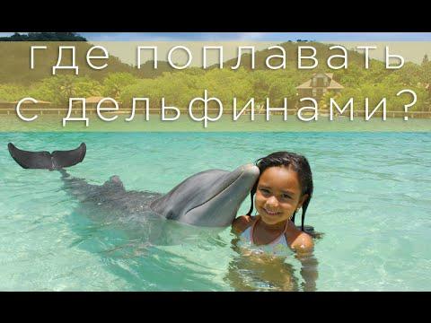 Как и где плавать с дельфинами? - Дельфиний Риф