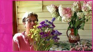 сухоцветы - статице и гортензия. Как засушить цветы?