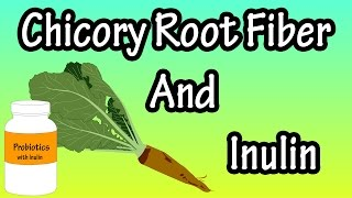 In this video i discuss what chicory root fiber is, and also inulin some of the benefits drawbacks. transcript common is a blue flo...