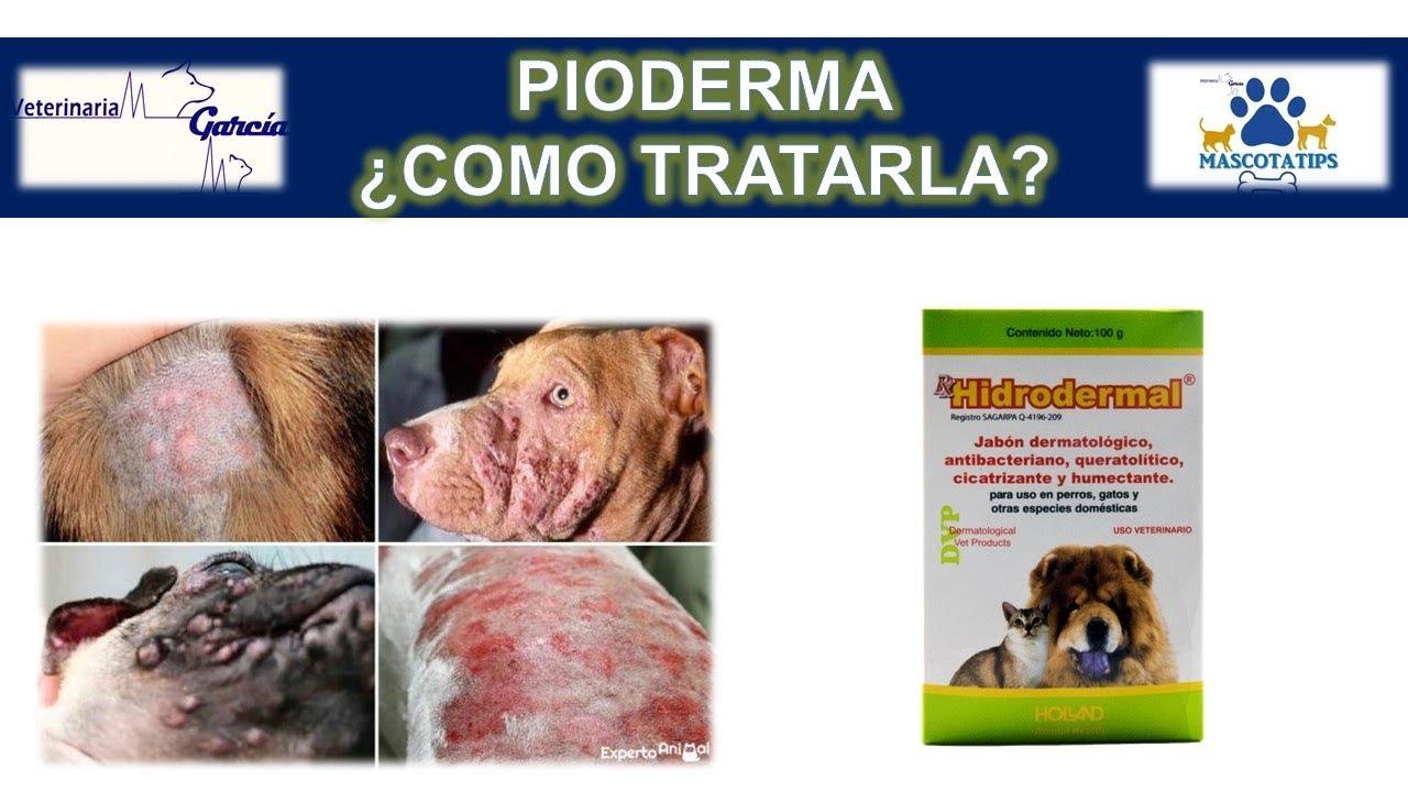 infeccion en piel de los perros
