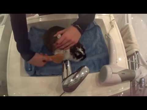 Как мыть кролика