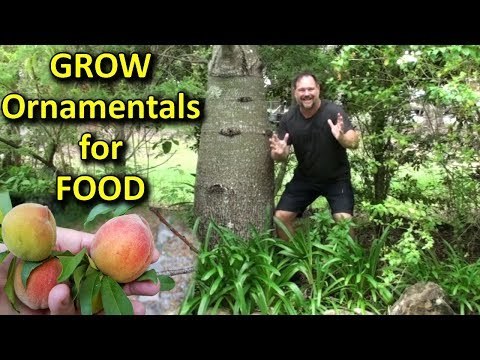 Ornamental Plants for the Food Gardener - Why Grow them & What to Look for