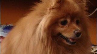 Таксист украл у пассажира собаку, которой была необходима медпомощь