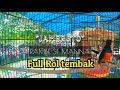 Di Kelas Utama Road To Gubernur Cup Murai  Jambreto  Ngamuk  Mp3 - Mp4 Download