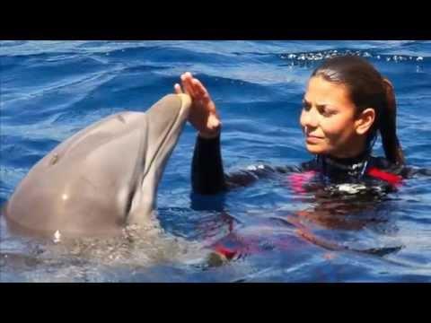 Все дельфины в ураган (караоке)