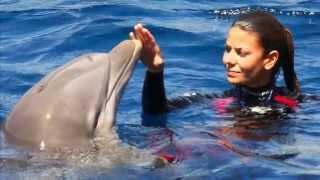 Все дельфины в ураган уплывают в океан...   All dolphins in hurricane swim in the ocean...