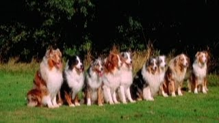 Dog Training: The John Fisher Way (trailer)