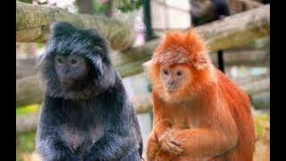 Лиссабонский зоопарк (Jardim Zoológico) , : лучшие советы перед посещением