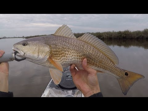 Redfish on the Halfshell (Catch, Clean, Cook)