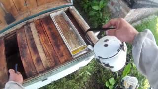 Будет ли майский мед с такой погодой? Голодные пчелы.(Подписывайся на пчелиный видеоблог:) Наша группа в вк https://vk.com/public75962373 Помощь каналу - R641772743946., 2016-06-08T18:03:36.000Z)
