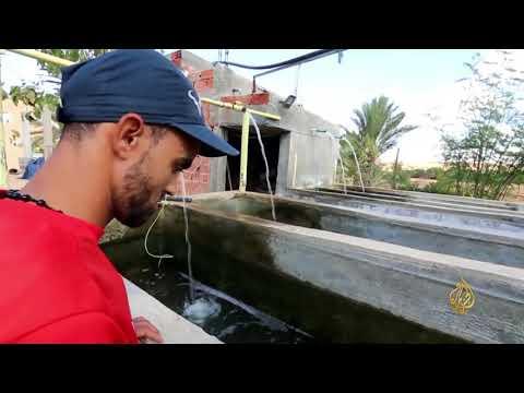 هذا الصباح- مزرعة أسماك بقلب الصحراء التونسية  - 12:22-2017 / 11 / 16