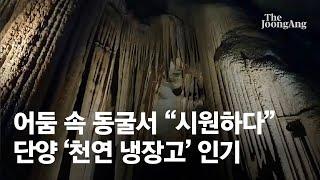 """어둠 속 동굴서 """"시원하다"""" 탄성…폭염 심할 수록 뜨는…"""