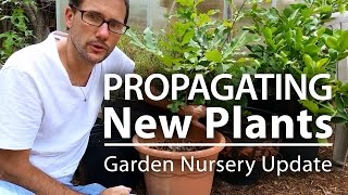 Propagating New Plants: Garden Nursery Corner Update