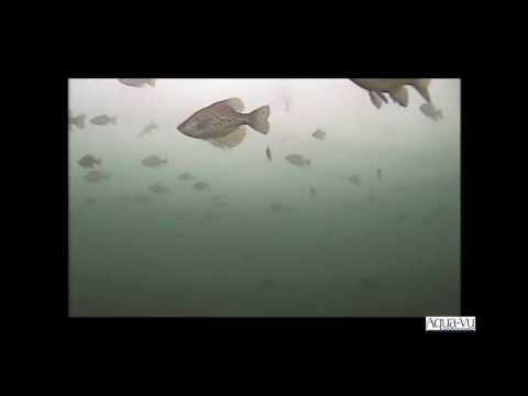 Aqua-Vu 715c Underwater Camera Color Fish Camera