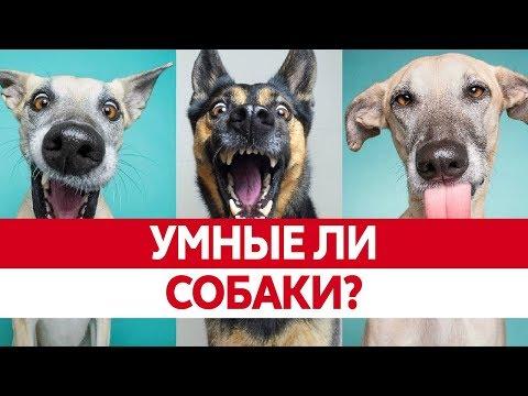 Как нас воспринимают собаки