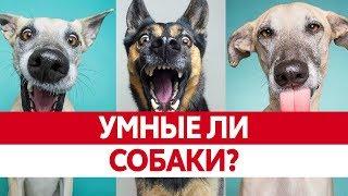 ПОНИМАЮТ ЛИ НАС СОБАКИ? Интеллект собак или собаки как люди