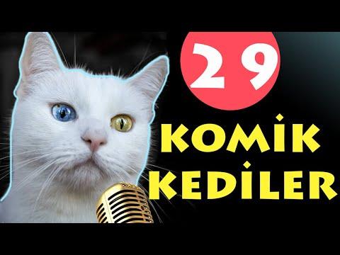 Konuşan Kediler 29 - Komik Kediler - En Komik Kedi ları   Pisi Komedi TV