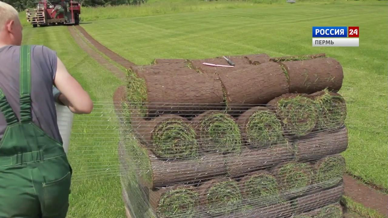 Посев газонной травы / как посадить газон? - YouTube
