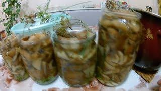 Грибы Волнушки Зонтики Как мы Грибы Собирали Маринованные грибы на зиму