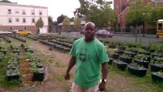 Brother Barry at a 500+ Earth Box farm in Jersey City, NJ