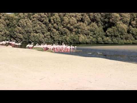 Dubai Flamingo Reserve