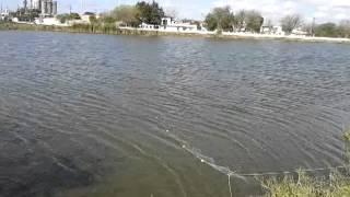 Pesca de catan en laguna de H. Matamoros Tamps.