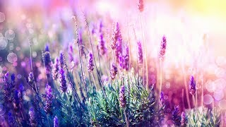 Download Beautiful Relaxing Music for Stress Relief ~ Calming Music ~ Meditation, Relaxation, Sleep, Spa
