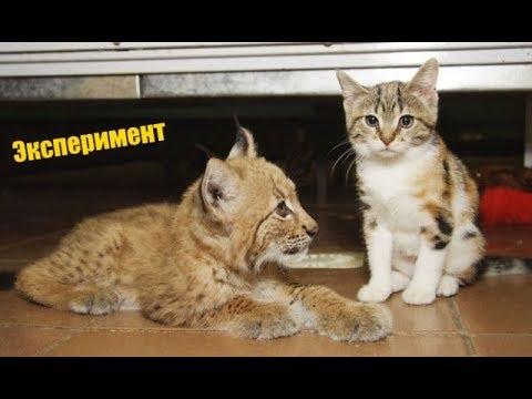 Люди подсадили домашнего котенка за 11 февраля