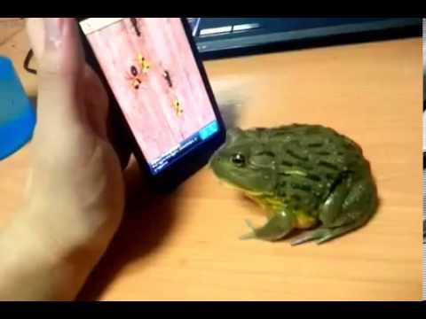 Необычные и прикольные лягушки и жабы (27 фото)