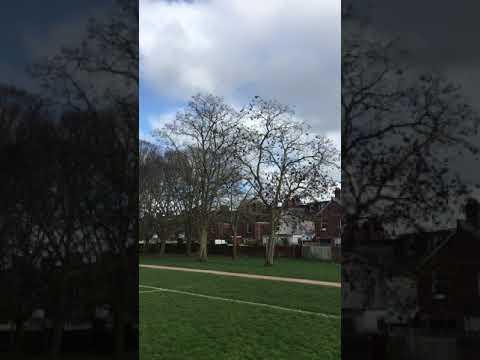 Black Locust - Trees - February 2019