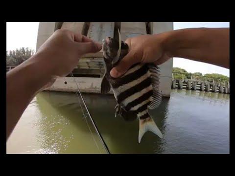 Bank Fishing Titusville