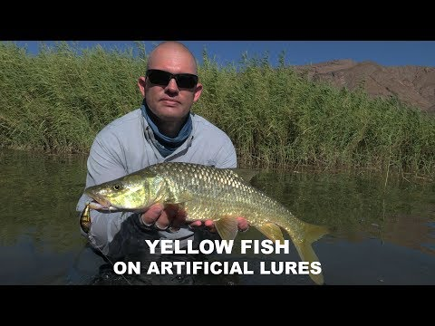 Fishing The Richtersveld For Yellow Fish On Artificial Lures