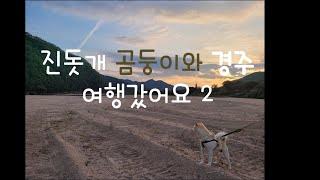 진돗개 곰둥이와 경주여행2탄
