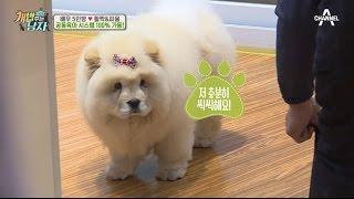 [예능] 개밥주는남자 시즌2 3회_170513