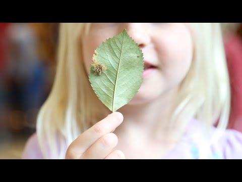 Blue Sky Science: What Is Cedar-apple Rust Disease?