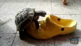 Turtles vs Shoes Compilation