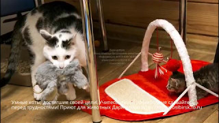 ★Умный кот из приюта★ достигающий своих целей Учитесь люди Не сдавайтесь перед трудностями!