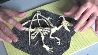 Crafting a Dragon's Skeletal Remains for D&D (The DM's Craft, EP 75)