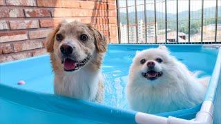 집에 작은 수영장이 생겼어요!