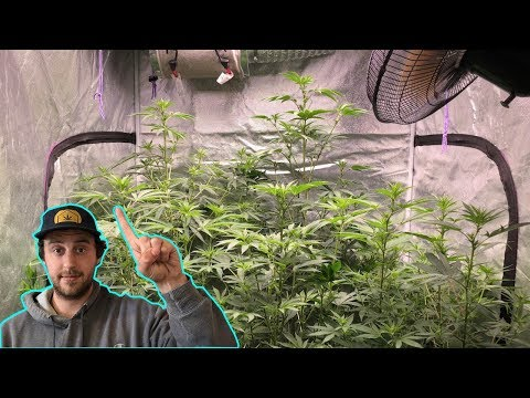 Learn how to Grow Weed at Home Easy with GreenBox Grown: Your Personal Marijuana Consultant