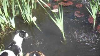 Schelly rettet die Enten